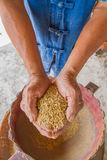 Ris förestående, bonde Royaltyfri Fotografi