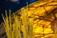 Ris med härlig gul guld arkivfoton