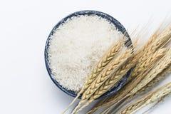 Ris med vete Arkivfoto