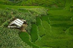 Ris- och havrefält i bergen Arkivfoton