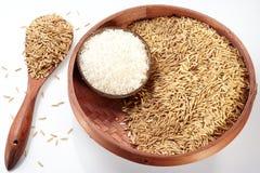 Ris och risfält Royaltyfri Fotografi