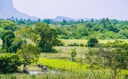 Ris sparar framme av Rocky Mountains nära El Nido, Palawan, Filippinerna Royaltyfri Foto