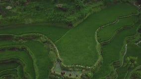 Ris terrasserade fromdrone för flyg- sikt för fält Grön riskoloni i berg i Guangxi, Kina jordbruks- industri stock video
