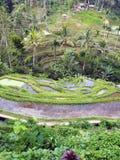 Ris terrasserade risfält och palmträd på ön av Bali, Indonesien arkivbild