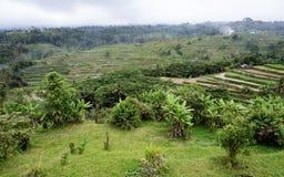 Ris terrasserade risfältfält i centrala Bali, Indonesien Arkivfoton