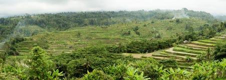 Ris terrasserade risfältfält i centrala Bali, Indonesien Arkivfoto