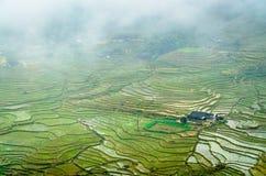 Ris terrasserar på en regnig dag i Sapa Arkivbilder