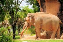 Risa del elefante Imagen de archivo libre de regalías