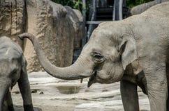 Risa joven del elefante Fotos de archivo