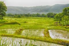 risaia Fotografia Stock Libera da Diritti