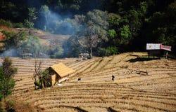 Risaia archivata in a nord della Tailandia Fotografia Stock Libera da Diritti