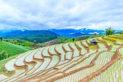 Risaia come l'agricoltura fatta un passo Fotografie Stock Libere da Diritti