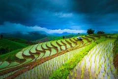 Risaia come l'agricoltura fatta un passo Immagini Stock Libere da Diritti