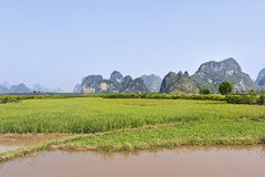 Risaia con il canale sulla priorità alta, collina sui precedenti, Yangshuo, provincia del Guangxi, Cina di morfologia carsica Fotografia Stock Libera da Diritti