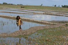 RISAIA DELL'ASIA TIMOR ORIENTALE TIMOR EST LOIHUNO Fotografia Stock Libera da Diritti