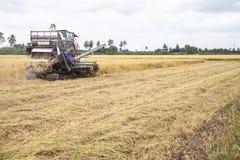Risaia di raccolto meccanico delle mietitrebbiatrici Fotografia Stock Libera da Diritti