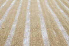 Risaia di riso Immagine Stock