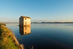 Risaia di riso sommersa Fotografie Stock Libere da Diritti