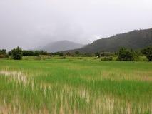 Risaia nel Laos Immagine Stock