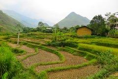Risaia nel Vietnam Fotografie Stock