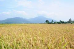 Risaia nell'isola di Langkawi, Malesia fotografie stock libere da diritti
