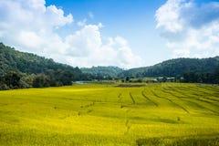 Risaie, agricoltura a terrazze del paesaggio Fotografia Stock