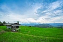 Risaie, agricoltura a terrazze del paesaggio di PA Pong Pieng di divieto Fotografia Stock Libera da Diritti