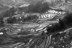 Risaie bagnate cinesi in bianco e nero Fotografie Stock