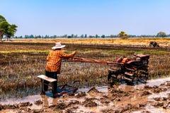 Risaie che sono state raccolte e stanno preparando per la piantatura seguente del riso fotografia stock