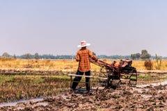 Risaie che sono state raccolte e stanno preparando per la piantatura seguente del riso fotografia stock libera da diritti