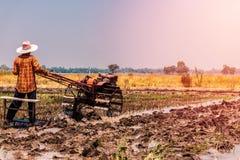 Risaie che sono state raccolte e stanno preparando per la piantatura seguente del riso immagini stock libere da diritti