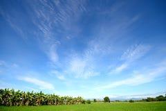 Risaie con cielo blu Fotografie Stock Libere da Diritti