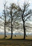 Risaie con le balle (Zerbolo, Italia del nord) Fotografia Stock Libera da Diritti