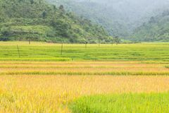 Risaie dei terrazzi in MU Cang Chai vietnam fotografia stock libera da diritti