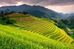 Risaie dei terrazzi sulla montagna nel nord-ovest del Vietnam Immagine Stock