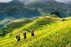 Risaie dei terrazzi sulla montagna nel nord-ovest del Vietnam Fotografia Stock