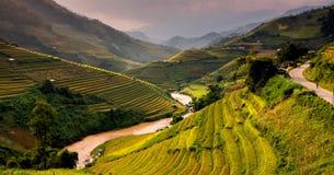 Risaie dei terrazzi sulla montagna nel nord-ovest del Vietnam Fotografie Stock Libere da Diritti