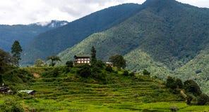 Risaie del Bhutan, Paro valle settembre 2015 Immagine Stock