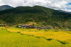 Risaie del Bhutan, Paro valle settembre 2015 Immagine Stock Libera da Diritti