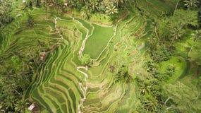 Risaie del terrazzo, Bali, Indonesia Fotografia Stock Libera da Diritti