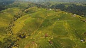 Risaie del terrazzo, Bali, Indonesia Immagini Stock Libere da Diritti