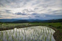 Risaie del terrazzo di agricoltura sulla montagna Fotografie Stock Libere da Diritti