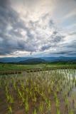 Risaie del terrazzo di agricoltura sulla montagna Immagine Stock Libera da Diritti