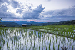 Risaie del terrazzo di agricoltura sulla montagna Fotografia Stock Libera da Diritti