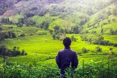 Risaie del terrazzo di sguardo dell'uomo in Chiangmai Tailandia Fotografie Stock