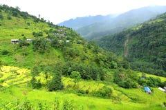 Risaie del terrazzo nel Nepal Fotografia Stock Libera da Diritti
