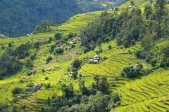 Risaie del terrazzo nel Nepal Immagini Stock