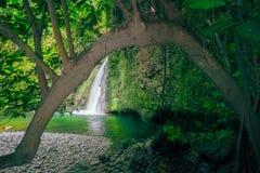 Risaie dell'Indonesia della natura di bellezza fotografie stock libere da diritti