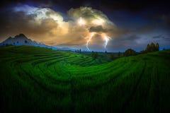 Risaie dell'Indonesia della natura di bellezza immagini stock libere da diritti