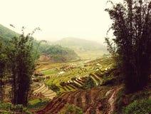 Risaie della valle di PA del Sa nel Vietnam Immagini Stock Libere da Diritti